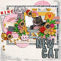 new_cat.jpg