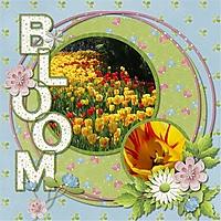Ottawa_Blooms.jpg