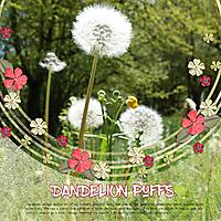 Dandelion_Puffs.jpg