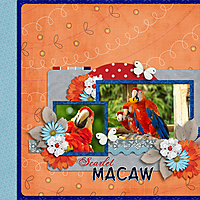 Scarlet_Macaw_GS.jpg