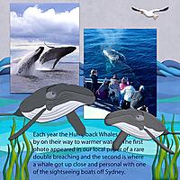 whale_watching_copy1.jpg
