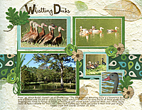 Whistling-Ducks.jpg