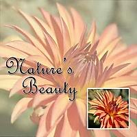 Nature_s-Beauty-Web.jpg