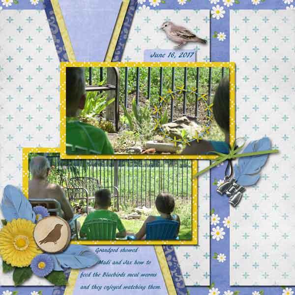 Feeding the Bluebirds