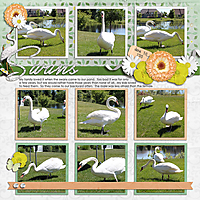 MFish_InstaFun_3-Swans_April_Diamond-350kcopy.jpg