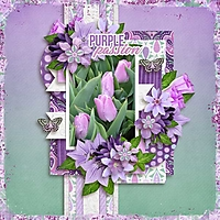 purple-passion-aimee-h-Tinc.jpg