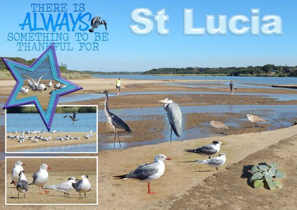 St Lucia Estuary 01