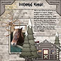 IcelandHorse_1.jpg