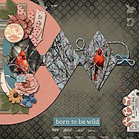 Born-To-Be-Wild-600x600.jpg