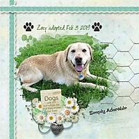 love-my-dog-zoey-SD.jpg