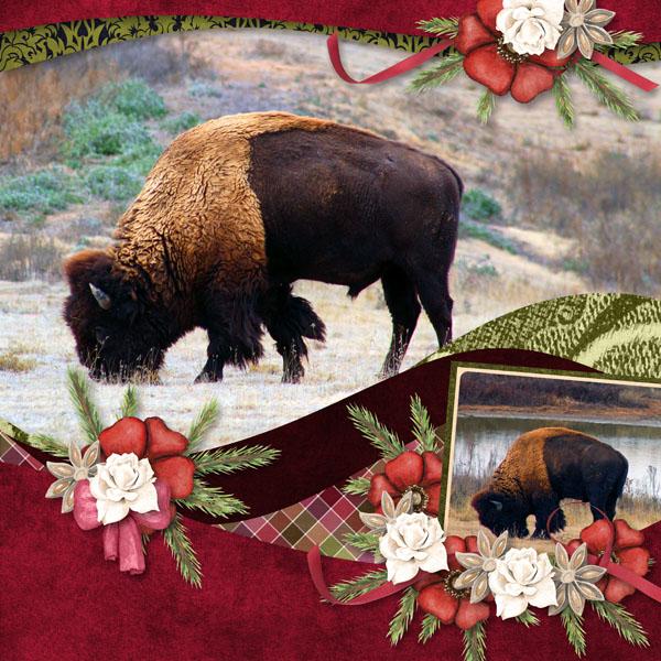 Clovis Bison