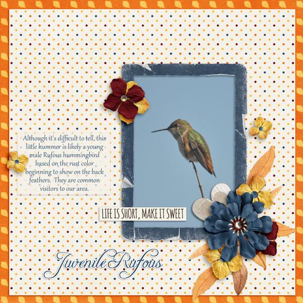Juvenile Rufous - Oct CAP mini challenge