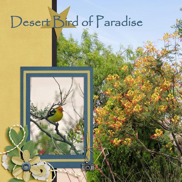 Desert Bird of Paradise