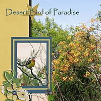 0-Desert-Bird-of-Paradise.jpg