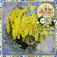 Golden-Wattle_webjmb.jpg