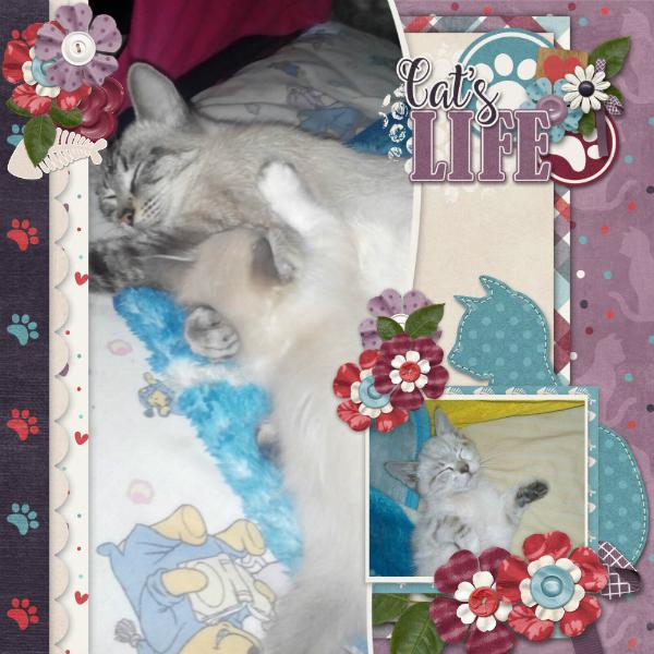 Cat_s_life