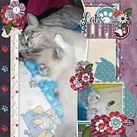 Cat_s_life.jpg