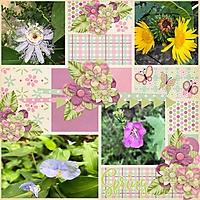 spring_flowers7.jpg