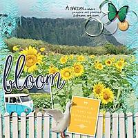 sunflower-daze-webv.jpg