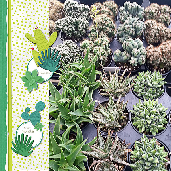 Spring Succulents