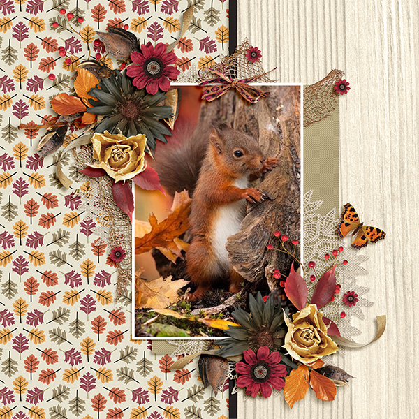 Autumn Fauna...