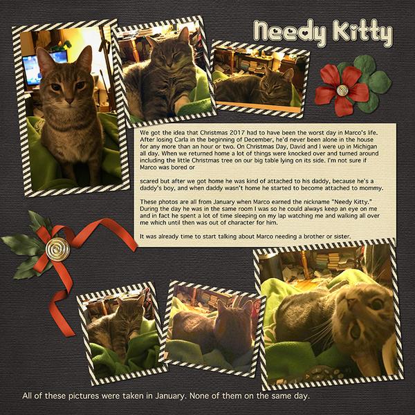 Needy Kitty (January 2018)