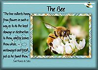 The-Bee.jpg
