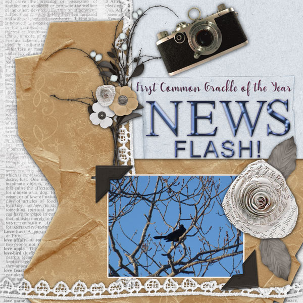Newsworthy Bird