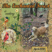 enchanted_forest_sml_april_2019_mfish_Left_Right1_01.jpg