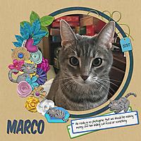 Marco-stud.jpg