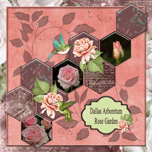 Dallas Arboretum Rose Garden