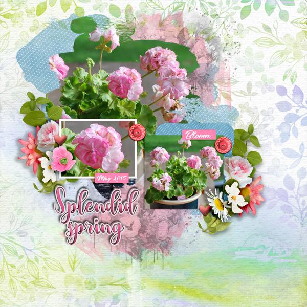 Splendid-spring