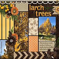 LARCH-TREES.jpg