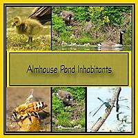 2019-September-Snickerdoodles-PocketChallenge_Almhouse-Pond-Inhabitants.jpg