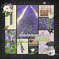 Lavander_fields.jpg