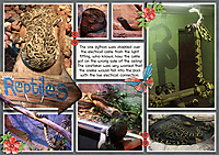 Pocket-201907-Reptiles.jpg