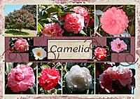 Pocket-201909-Camelia.jpg