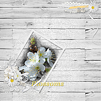 Blossoms-web2.jpg