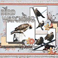bird_watching_small.jpg