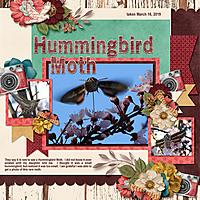 hummingbird_moth_small.jpg