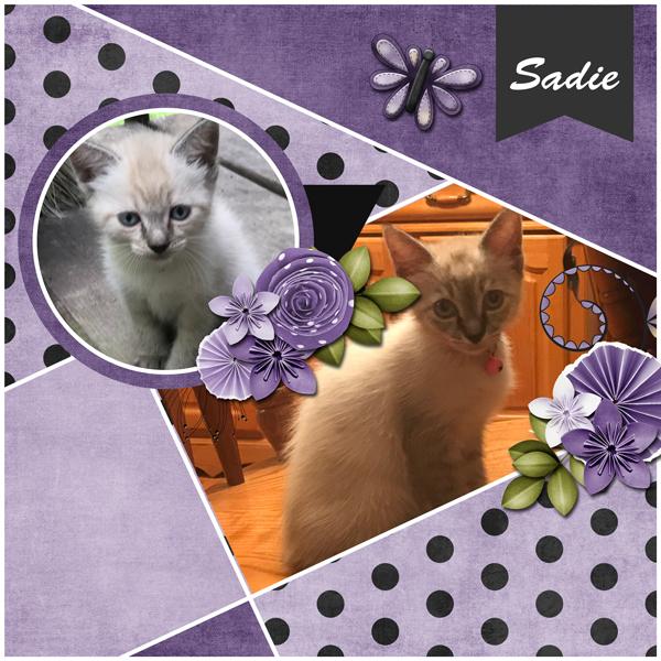Sadie3