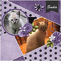 Sadie3.jpg
