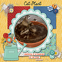 CatPlant.jpg