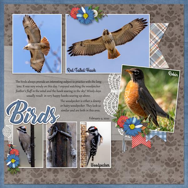 May Font - Feb Birds