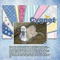 GSCWR_Cygnet.jpg