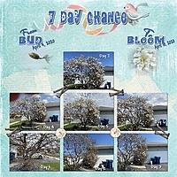 7DayChange_1.jpg