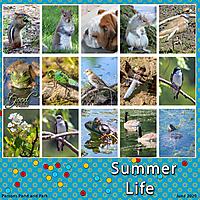 MK_Summer-Life.jpg