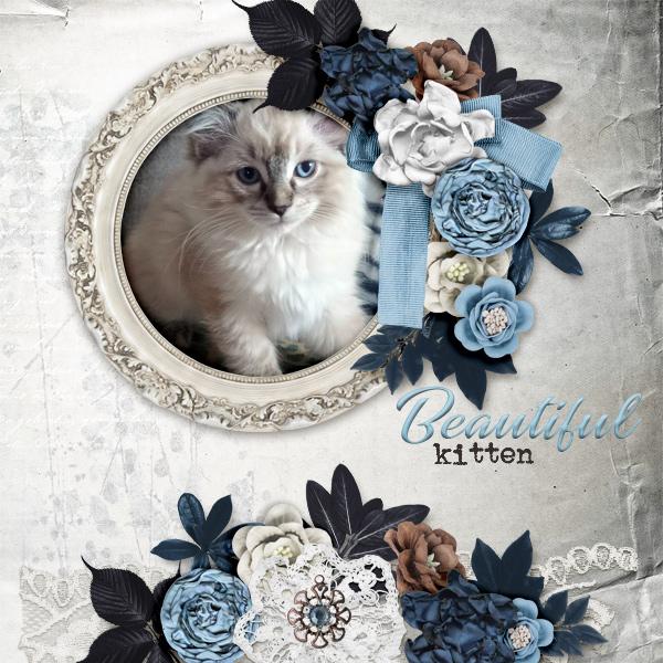 Beautiful-kitten