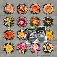 GS_BloomGrow-copy.jpg