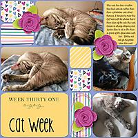 Cat-Week.jpg